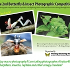 Butterflies & Insects Photography Competition