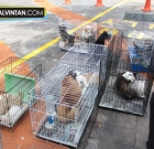 Cats and Dogs Rescued from Petsmore.com